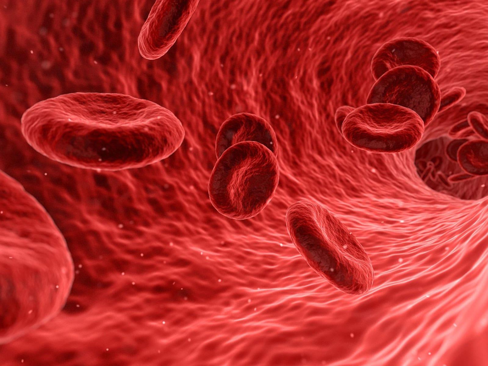 Bloedcirculatie